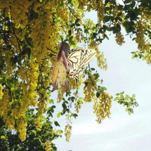 Fairy flying up to tree